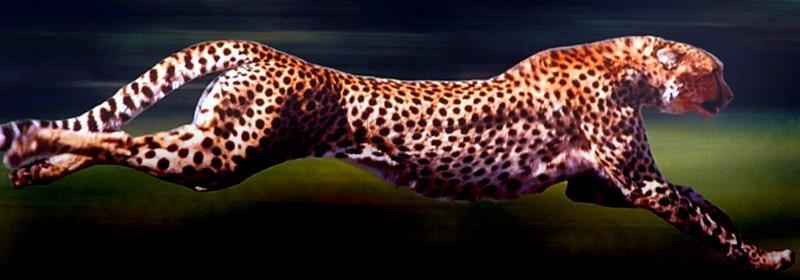 1964-cheetah-evolution_00a
