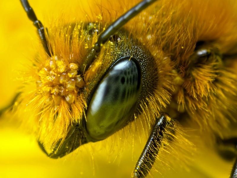 abeilles-00
