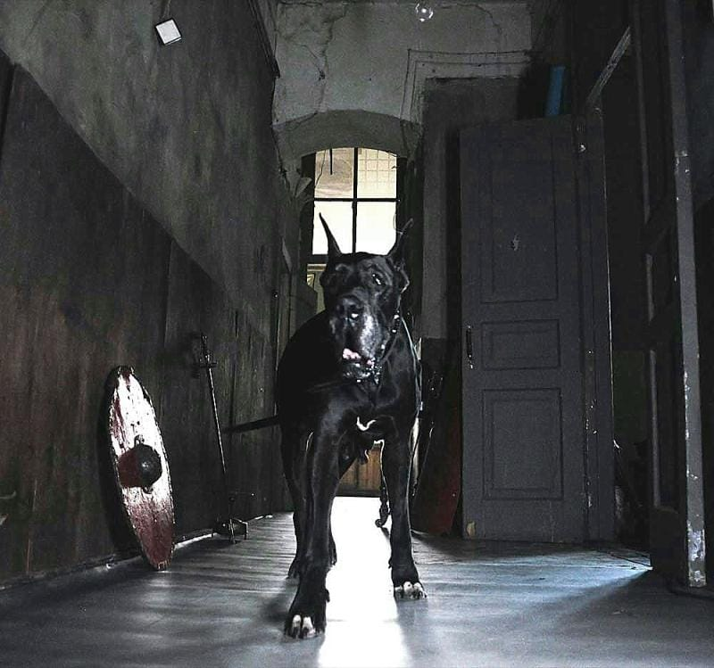big_black_dog__by_retroatelier
